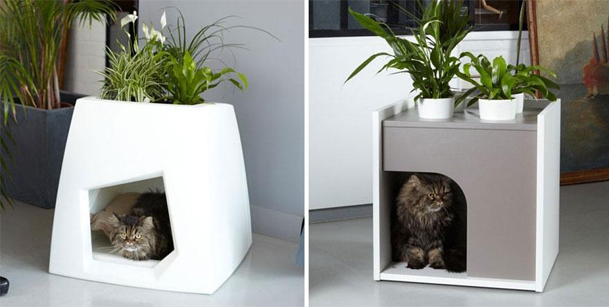 bitkili kedi evi