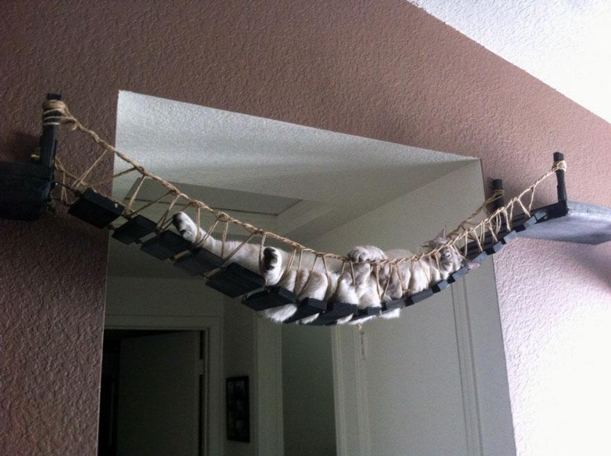 kedi köprüsü
