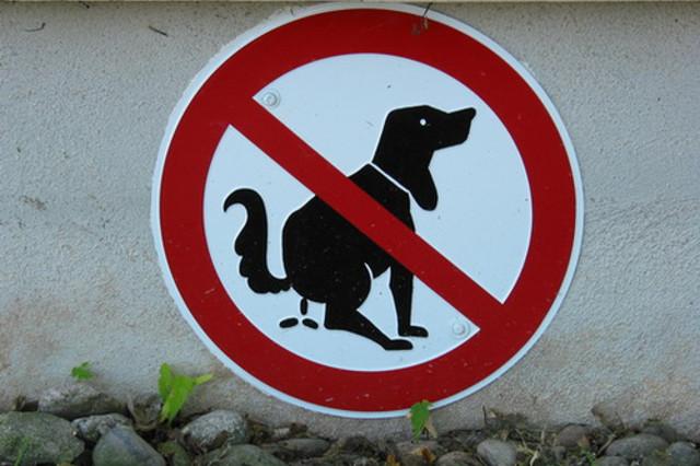 Köpek şey yapmasın ayıp