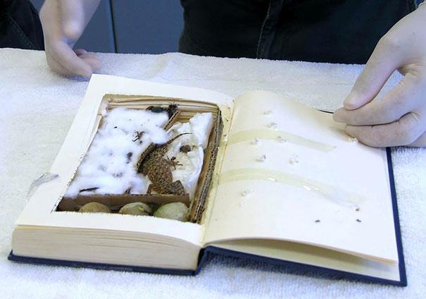 Kitap içinde geko kertenkele