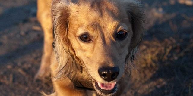 Köpeklerle ilgili ilginç bilgiler11