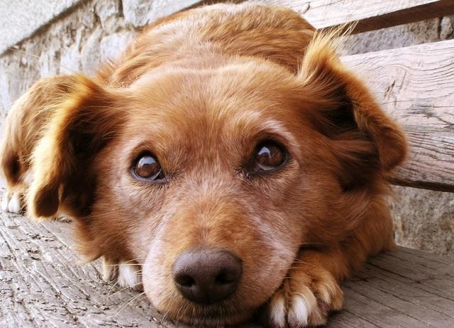Köpeklerle ilgili ilginç bilgiler13