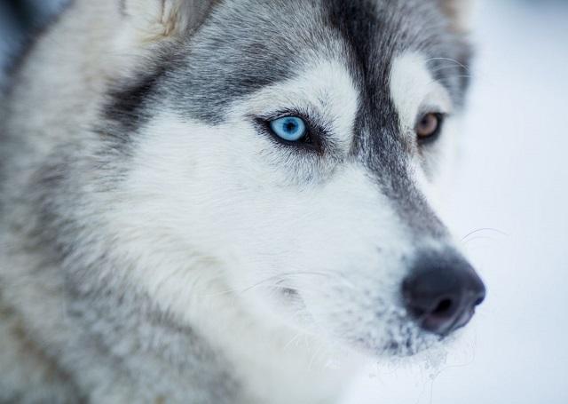 Köpeklerle ilgili ilginç bilgiler17
