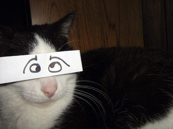 kedi gözleri çizim