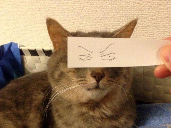 kedi gözleri çizim11