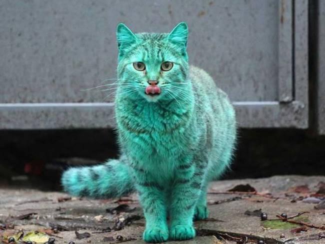 yeşil kedi