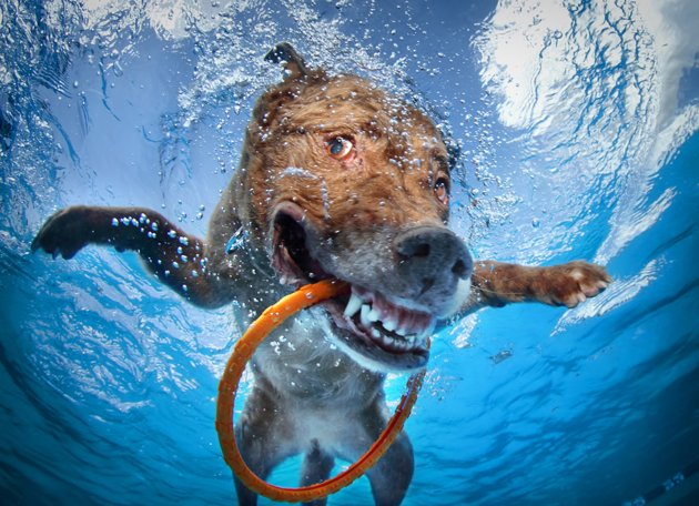 su altı köpek