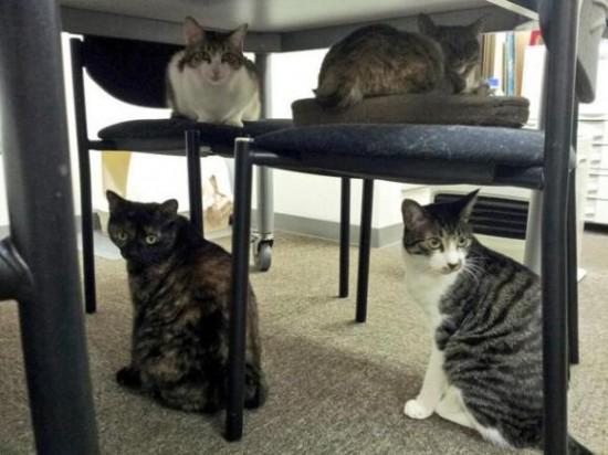 ofis-kedileri