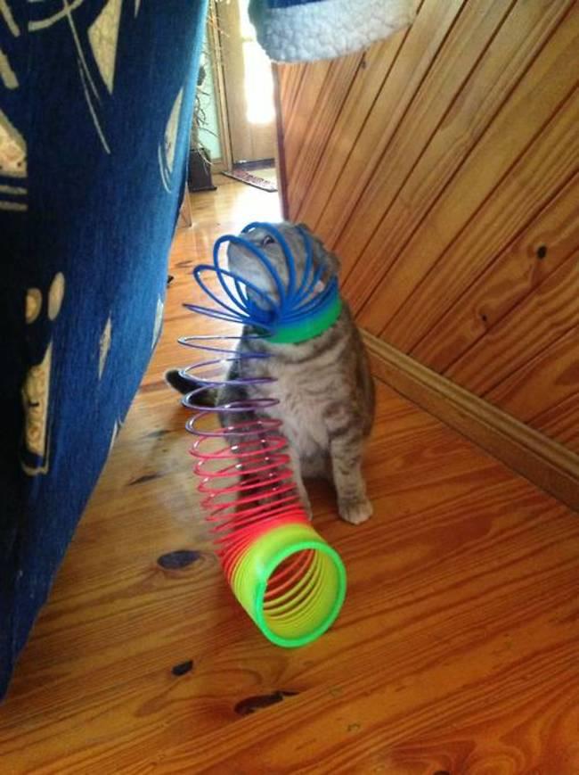kedi kafayı sıkıştıran