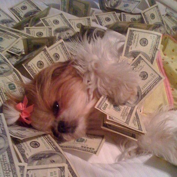 para içinde yüzen köpek