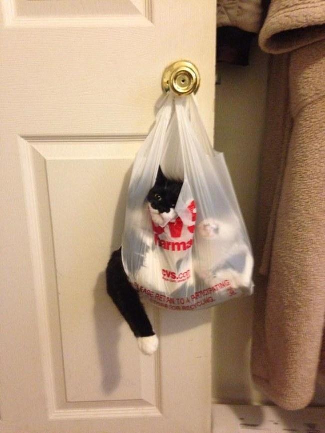 poşete giren kedi