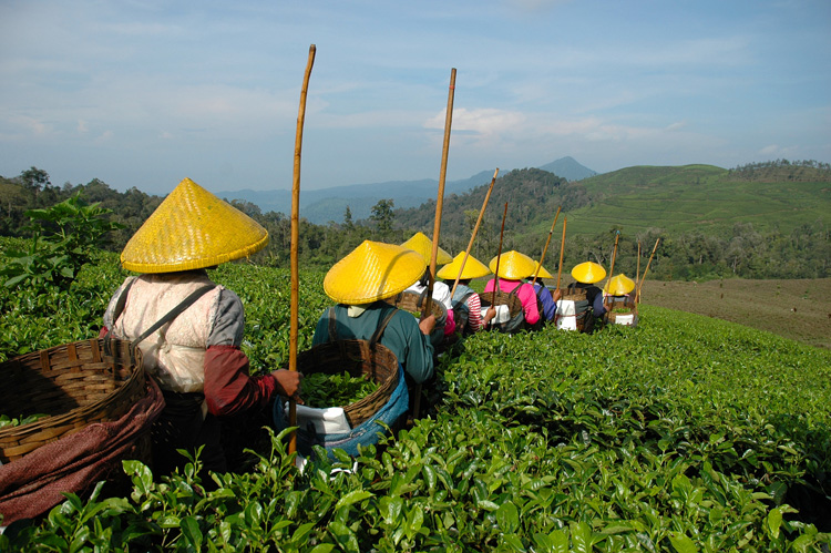 Çin Çay