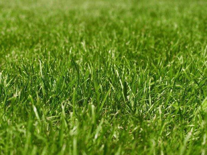 çimler