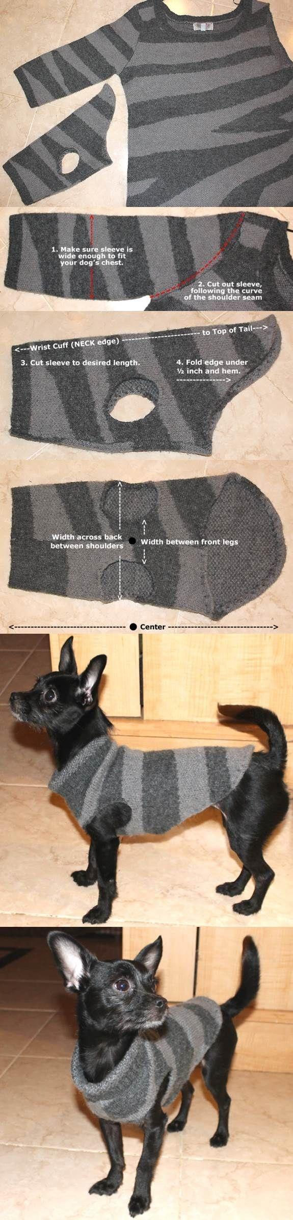 köpek elbisesi