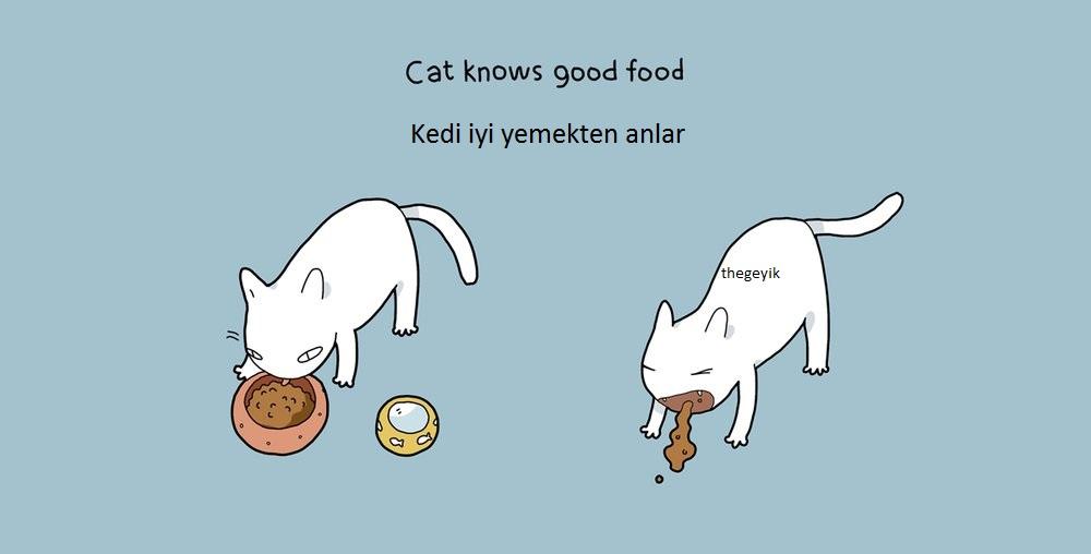 kedi kötü ve iyi yemeği ayırt edeblir