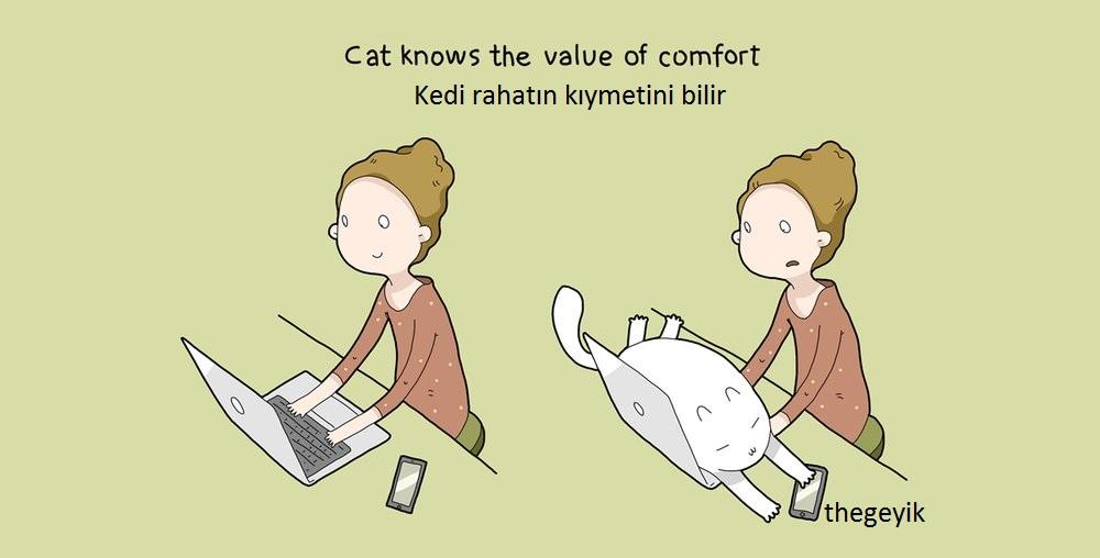 kedi rahat olmanın hakkını verir