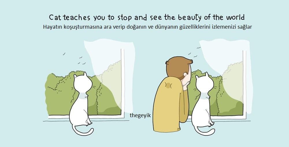 kedi sayesinde doğanın güzelliklerini izlersiniz