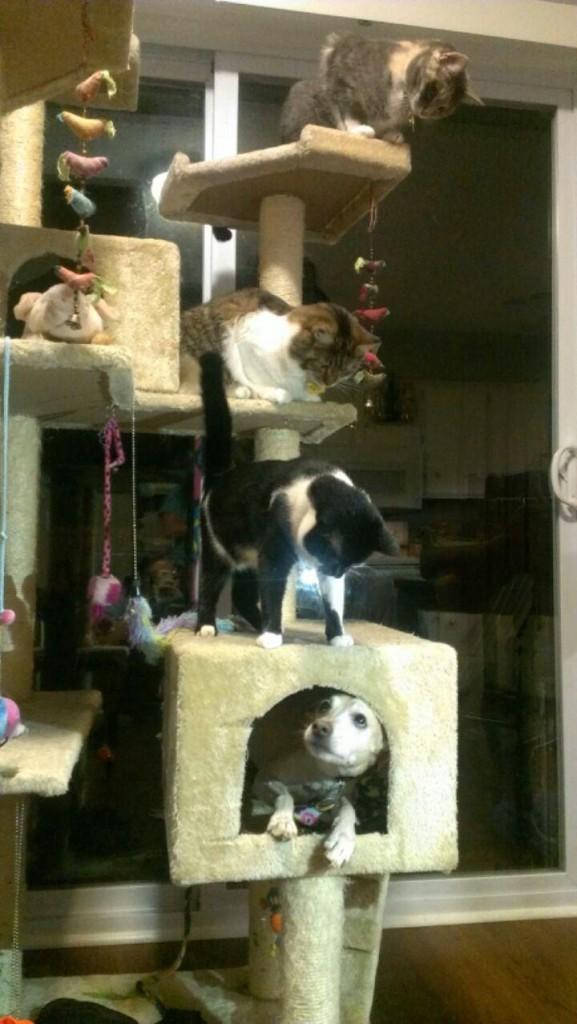 kediler köpeğe karşı