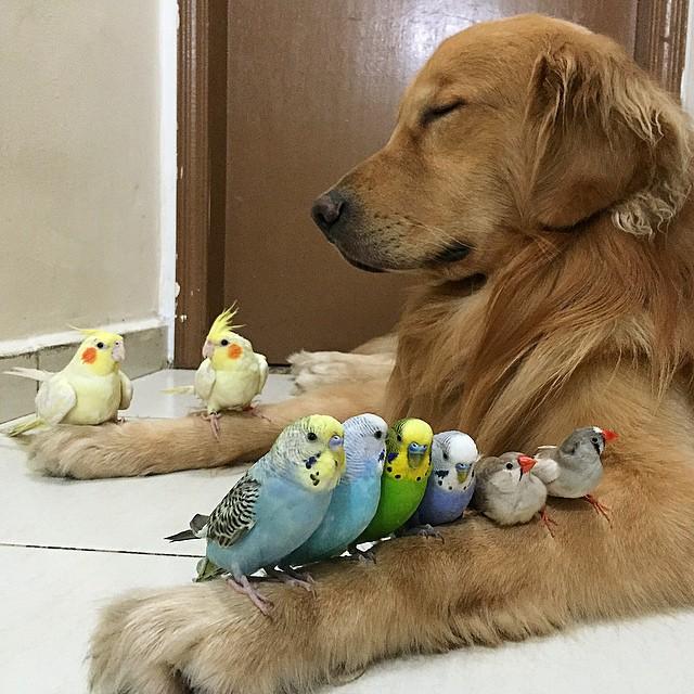 kuşlar ve köpek yanyana