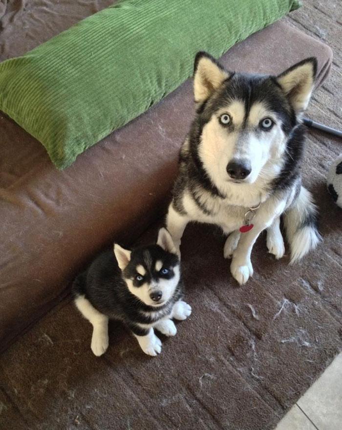 köpekler ve çocukları-1