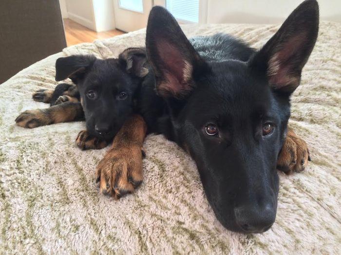 köpekler ve çocukları-2