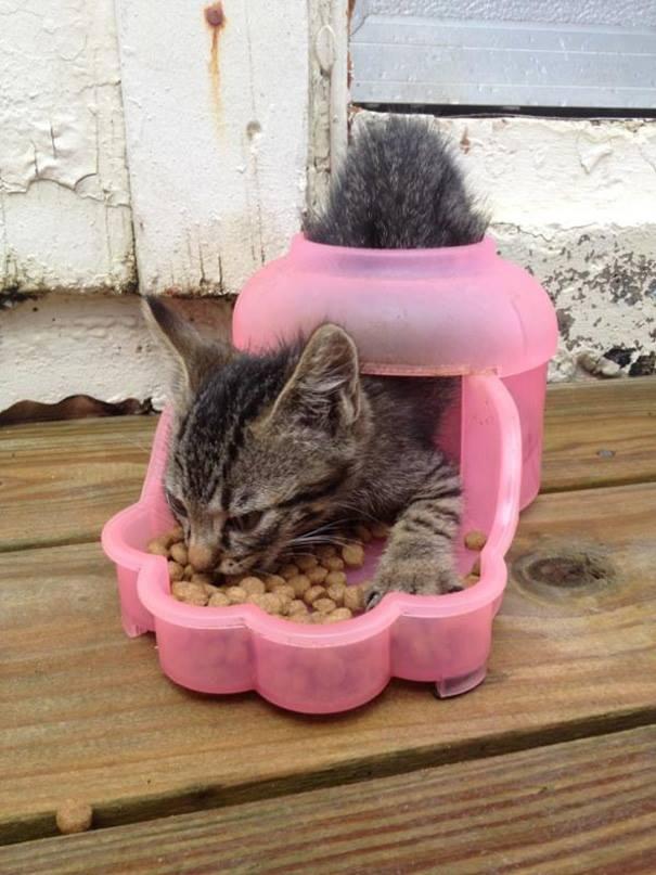 kedi mama