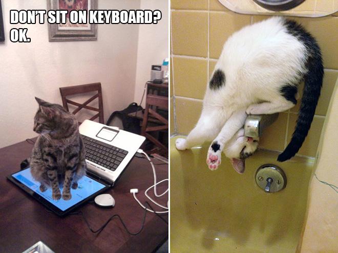 kedi mantığı komik