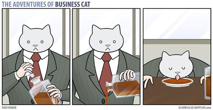 kedi patron