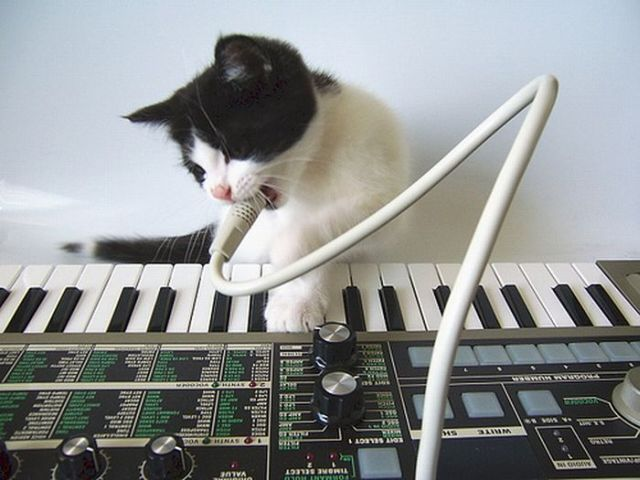 kedi şarkı