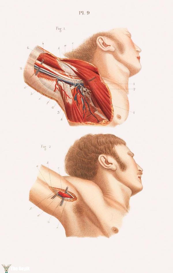 19. yydan cerrahi çizimler 4
