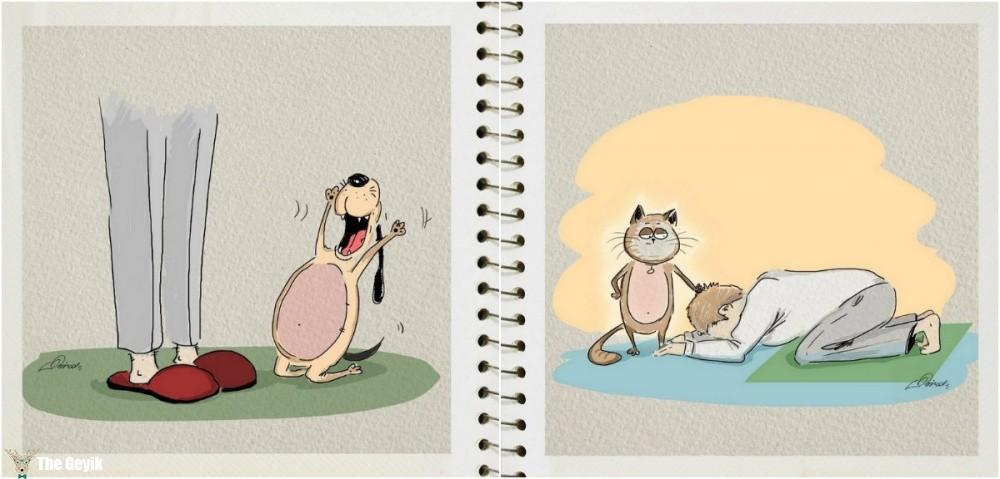 kedi köpek farkı 5