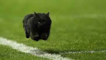 Rugby Maçını Bölen Kedi