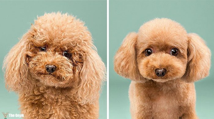 dog-grooming-photography-coverimage1