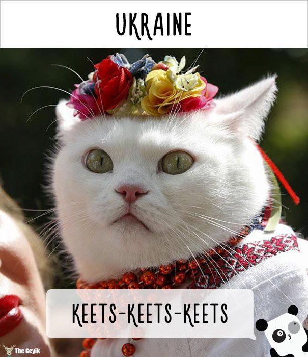 insanlar kedileri diğer dillerde nasıl çağırıyor 12