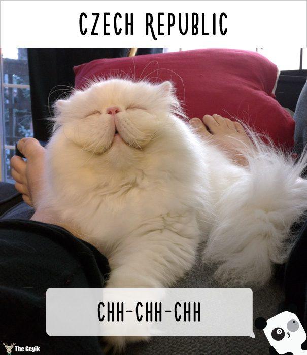 insanlar kedileri diğer dillerde nasıl çağırıyor 17