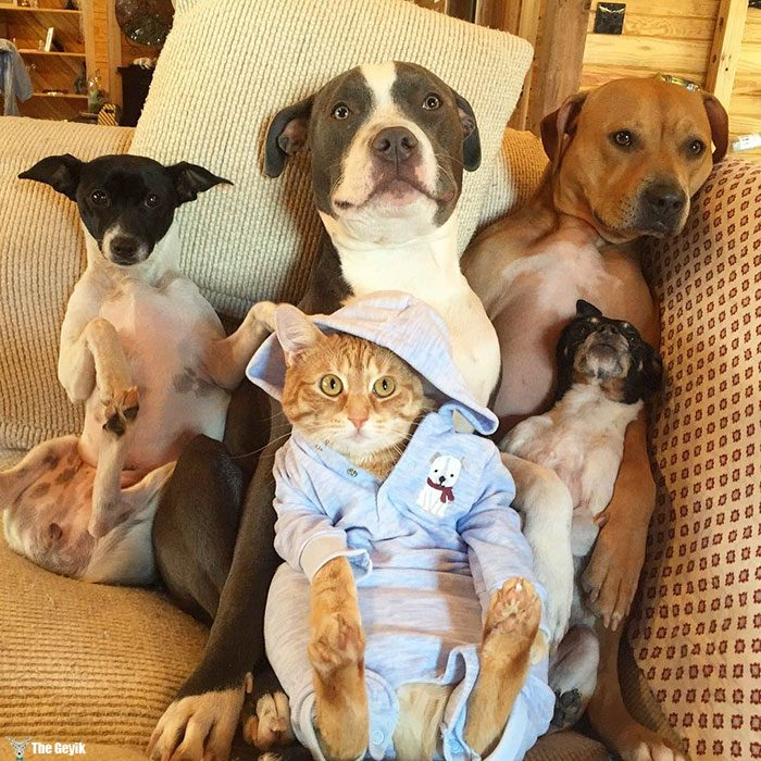 unusual-animal-friendship-dogs-cat-ducks-kasey-and-her-pack-33