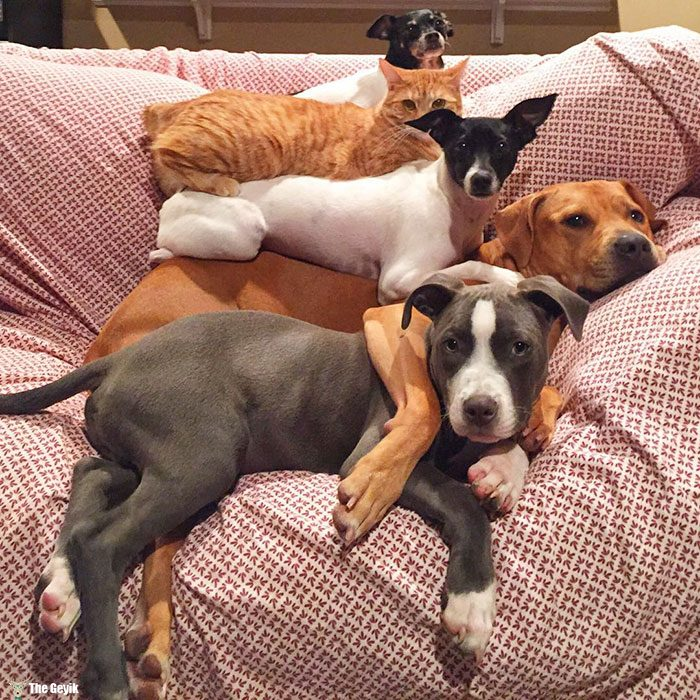 unusual-animal-friendship-dogs-cat-ducks-kasey-and-her-pack-38