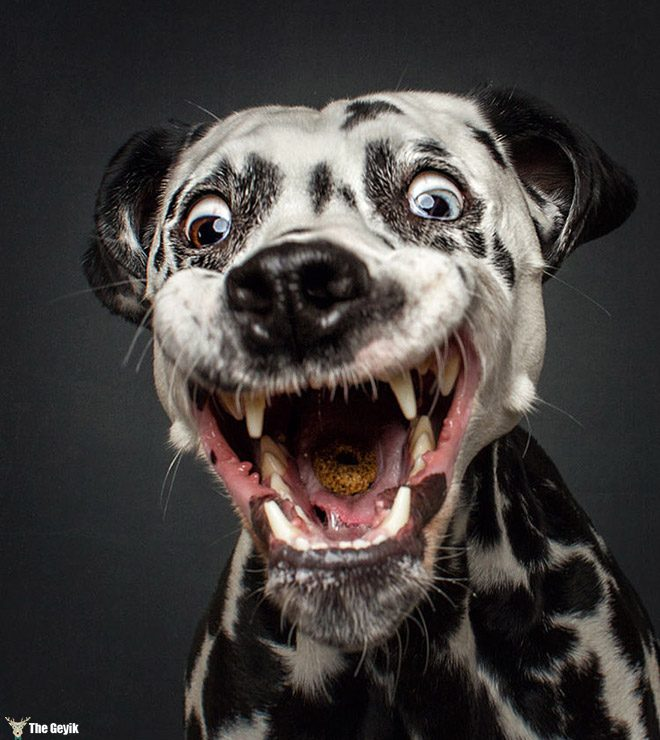 funny-dog-face7